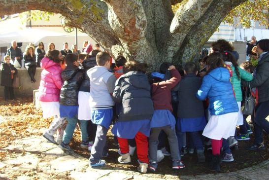 festa albero-liscia-3