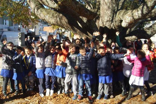 festa albero-liscia-7