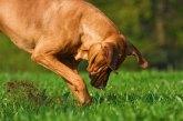 Salvata una cagnolina incinta abbandonata e legata a un palo