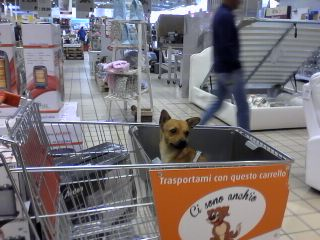 Cani e gatti al supermercato