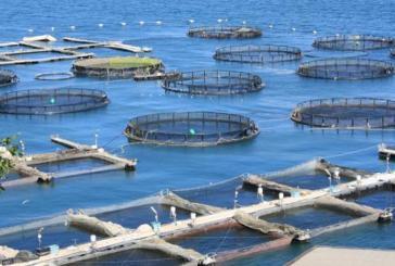 Pubblicato un nuovo bando per l'acquacoltura