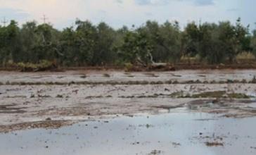 Niente indennizzi, 16 agricoltori vanno in Procura