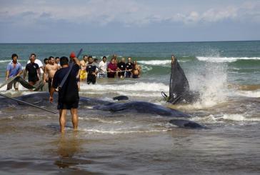 Capodogli spiaggiati: a settembre giornata contro la plastica in mare