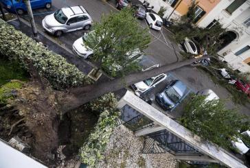 Alberi caduti per il maltempo, Coldiretti: