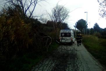 Il forte vento spezza alberi e rami, numerosi gli interventi a Vasto