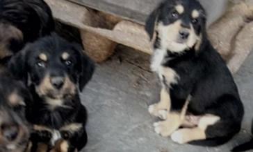 Una raccolta fondi per sterilizzare cani e gatti