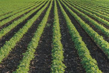 Agricoltura, prorogato il protocollo sul contrasto al caporalato