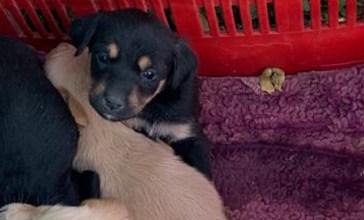 Morti 4 degli otto cuccioli abbandonati nei campi