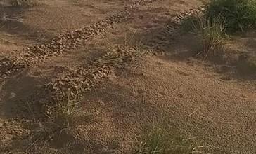 Con il quad in spiaggia, danni ai nidi del Fratino