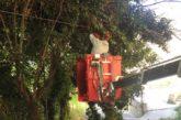 Rimosso un grosso albero caduto su dei tralicci in via Porta Palazzo