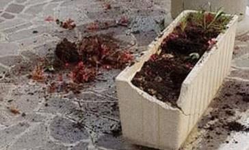 Incastrato dalle telecamere: il vandalo dei fiori è un anziano