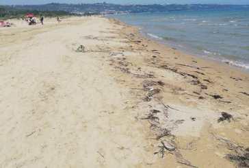 La Lega: litorale sporco, serve un intervento