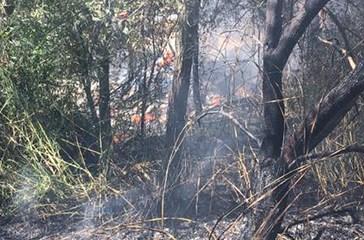 Quaranta ettari distrutti da incendi dolosi