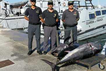 Termoli, pescava tonno rosso. Multa da 50mila euro