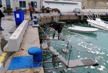 I soci del Circolo nautico ripuliscono il porto dalla plastica