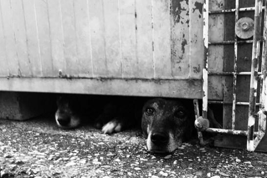 Cani abbandonati 1