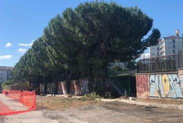 Il Comune fa tagliare i pini sani, domani scatta la protesta