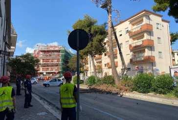 Vasto, tagliato un pino secco e pericolante in viale D'Annunzio