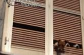 Sequestrato allevamento lager di cani nel Chietino