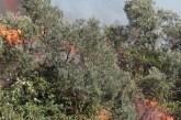 A fuoco la Riserva Dannunziana di Pescara, traffico ferroviario sospeso: cancellati alcuni treni