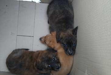 Vasto, tre cuccioli abbandonati in uno scatolone