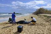 Delfini spiaggiati in Abruzzo, emergenza interazioni con le attività umane nell'Adriatico