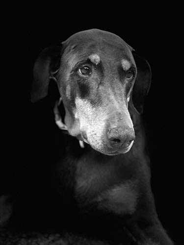 Del the Doberman