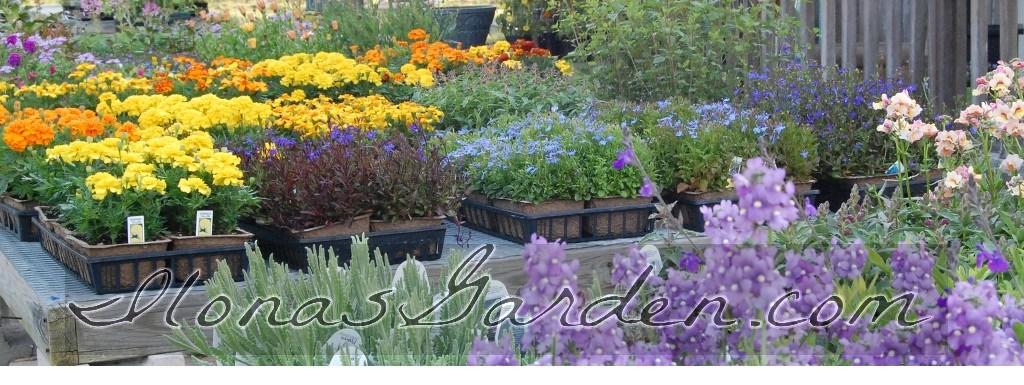 New In My Garden World