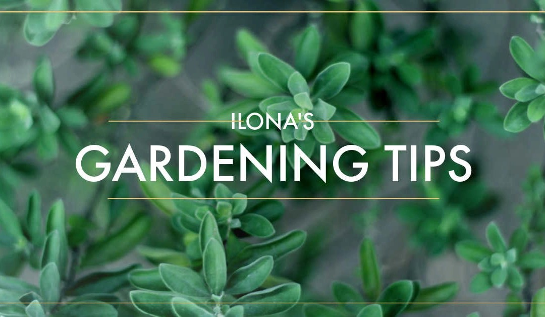 Basic Information for Newbie Gardeners, What You Need to Know!
