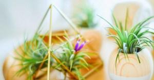 plant-nursery-01