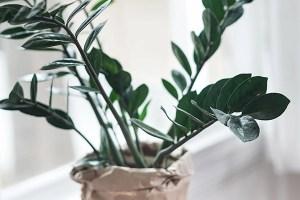 plant-nursery-25