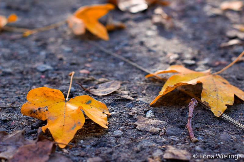 herfstfoto 6 herfst bladeren genieten