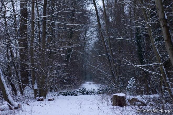 sneeuw-11 koude plaatjes