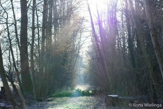 koud 3 fotografie landschap bos sneeuw bomen