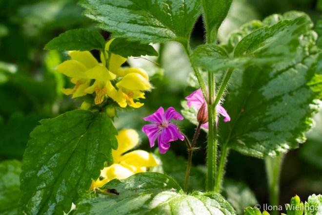 lente 3 bloemen geel en paars