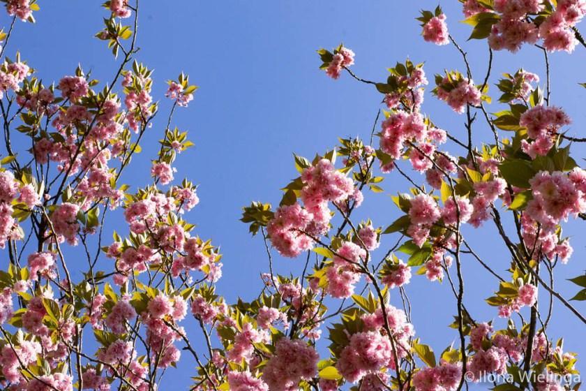 lente 9 bloemen