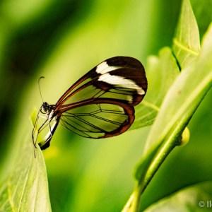 eigen kracht vlinders 1