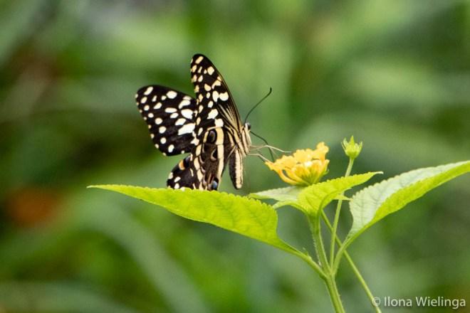 eigen kracht vlinders 2