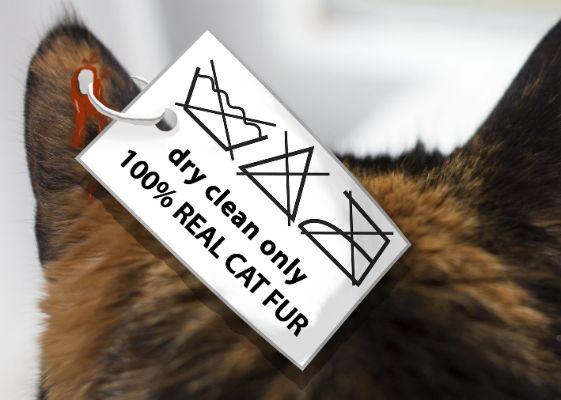 Boomerang Card Design for Bont voor Dieren