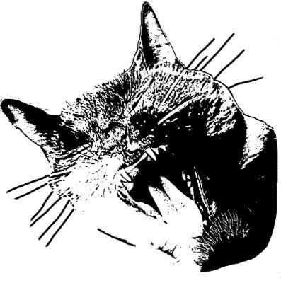 T-shirt Design 'Tijgerbloem'