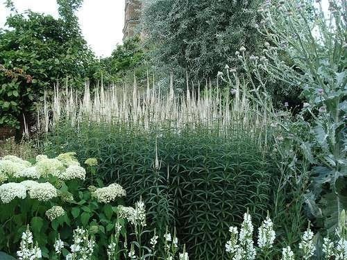 Design Elements Of English Garden Style. Ilona's Garden - english garden design