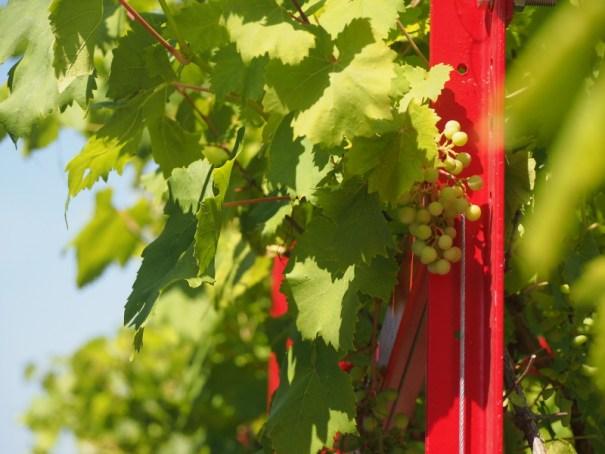 víno expo itálie