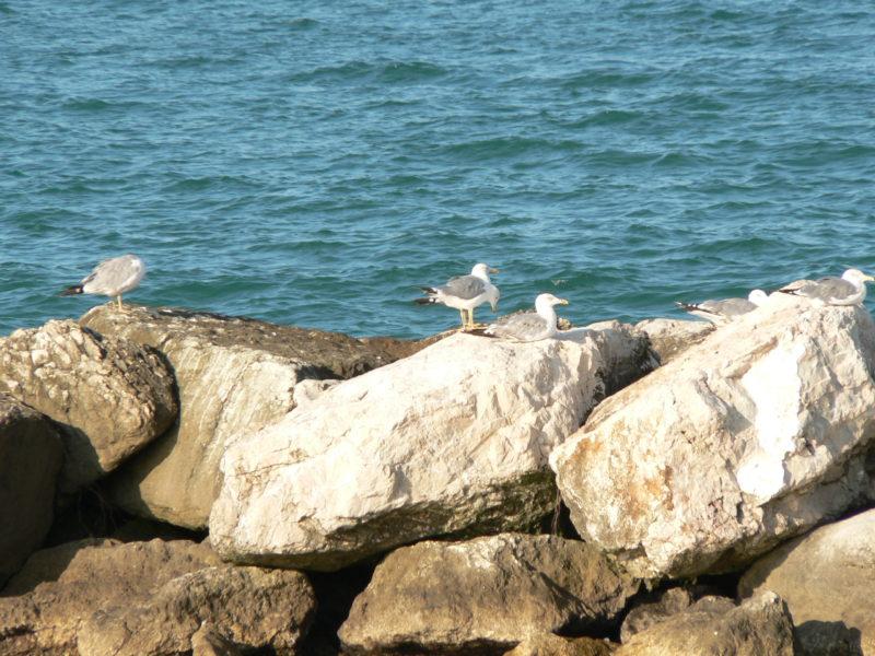 itálie moře rimini