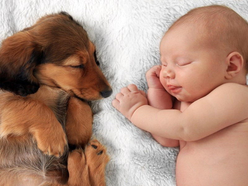 Dachshund sleeping on a blanket next to a baby