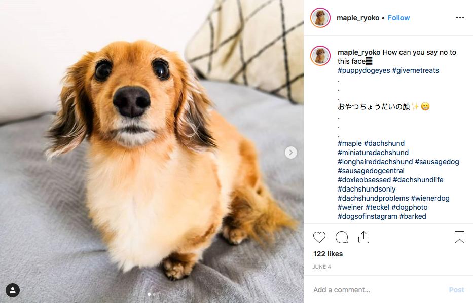 Instagram screenshot of @maple_ryoko