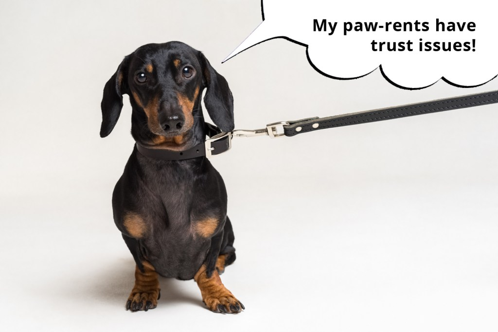 101 things dachshunds want you to know. Dachshund sat on the floor while on a lead