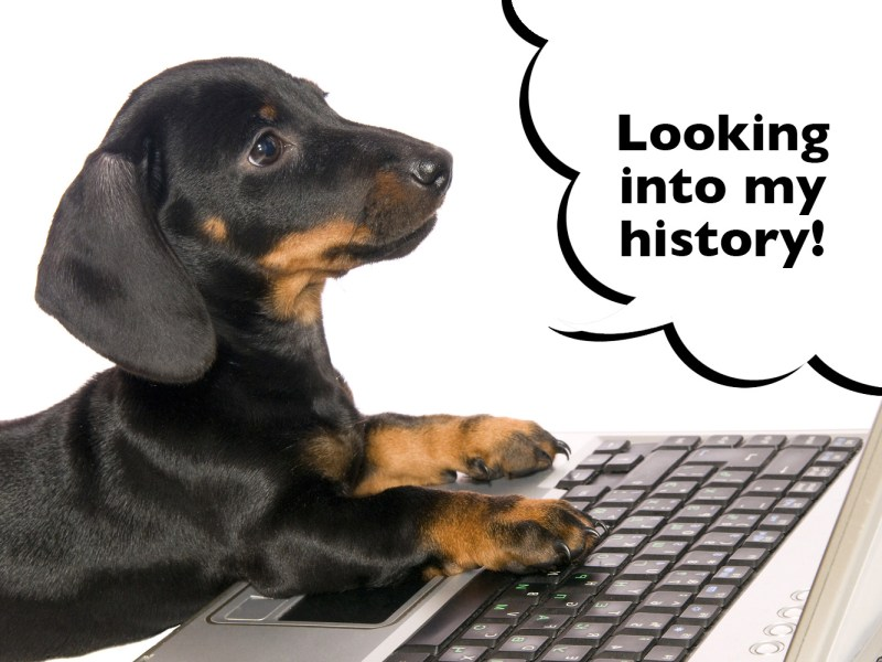 Dachshund history of the breed