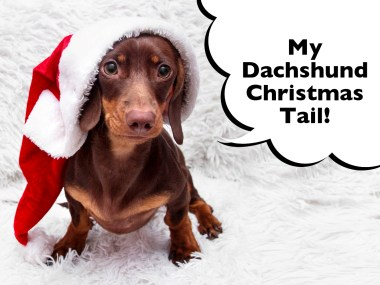 Dachshund Christmas Tale