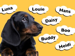 Top Dachshund Names