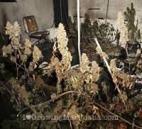 The Best Marijuana Grow Lights